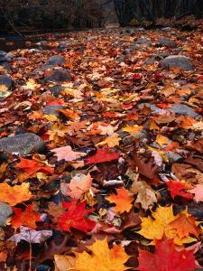 Fall Leaves Create a Patchwork of Colours, Great Smoky Mountains National Park, Tennessee, USA by Rob Blakers