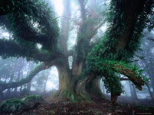 Giant Myrtle by Rob Blakers