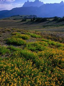 Wildflowers and Mountains in Distance Grand Teton National Park, Wyoming, USA by Rob Blakers