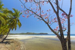 Beautiful Palm Fringed White Sand Playa Carrillo by Rob Francis