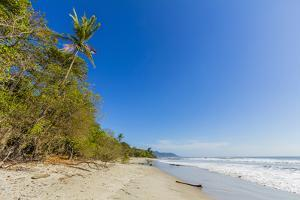 Tall Palms and Jungle Behind the Beach by Rob Francis
