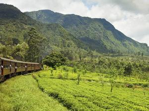 The Scenic Train Ride Through the Central Highlands, with its Mountains and Tea Plantations, Near N by Rob Francis