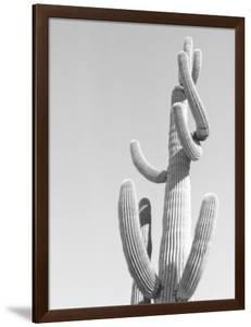 Black and White Image of a Cactus by Rob Lang