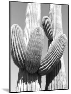 Black and White Image of Two Cactus Plant by Rob Lang