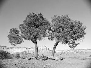 Black and White Image of Two Trees by Rob Lang