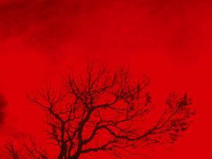 Tree Silhouette Against a Red Sky by Rob Lang