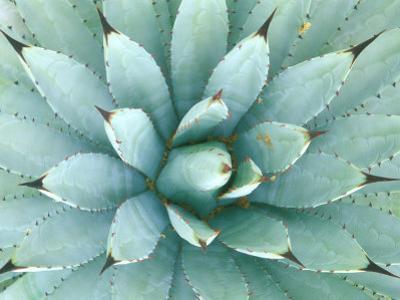 Agave, Desert Botanical Museum, Phoenix, Arizona, USA by Rob Tilley