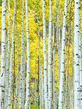 Bamboo Forest, Kyoto, Japan-Rob Tilley-Photographic Print