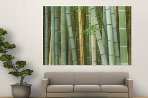 Bamboo Forest, Kyoto, Japan by Rob Tilley