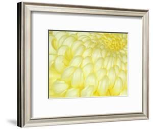 Chrysanthemum, Ise Shrine, Mie, Japan by Rob Tilley