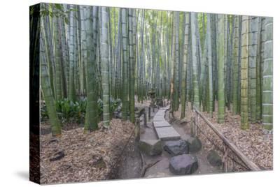 Japan, Kanagawa, Kamakura, Hokokuji Temple Garden