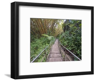 Path Through Bamboo Forest, Akaka Falls State Park, Hawaii, USA