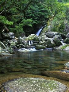 Shiratani Unsuikyo, Yakushima, Kagoshima, Japan by Rob Tilley
