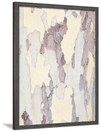 Sycamore Trunk Detail, Sedona, Arizona, USA