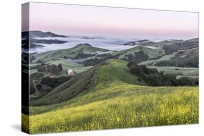 USA, California, Near Paso Robles, Mustard Hill Dawn