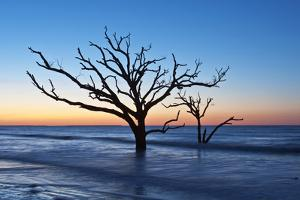USA, South Carolina, Edisto Island, Botany Bay, Boneyard Beach Dawn. by Rob Tilley