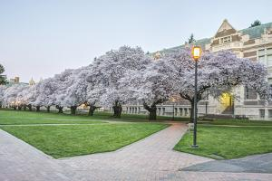 USA, Washington, Seattle, University of Washington Quad at Dawn by Rob Tilley