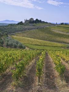 Vineyard, Chianti, Italy by Rob Tilley