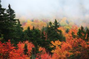 A Forest in Brilliant Autumn Hues Colors the Landscape Beneath a Thick Fog by Robbie George