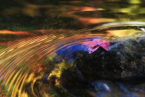 A Leaf Floats in Water Tinted with the Reflections of Autumn Colors by Robbie George