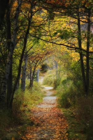 A Path Through a Forest Covered by Fallen Leaves in Autumn by Robbie George
