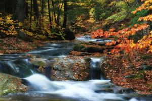 Fall Colors Surround a Roaring Waterfall in a Forest Stream by Robbie George