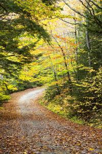 Fallen Leaves Litter a Forest Road in Autumn by Robbie George