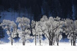 Ice and Snow Highlight Tree Branches in a Snowy Landscape by Robbie George