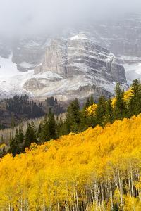 The Mountainside Is Ablaze with Golden-Hued Aspen Trees by Robbie George
