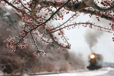 The Polar Express Passes Through Ice Covered Trees Along Maine's Narrow Gauge Railroad by Robbie George