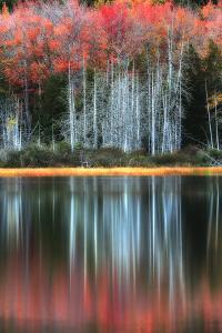 Trees in Autumn Colors Casting Reflections into a Calm Lake by Robbie George