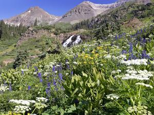 Wildflowers and Waterfall at Yankee Boy Basin Colorado by Robbie George