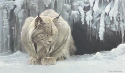 Dozing Lynx