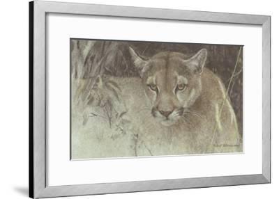 Tropical Cougar