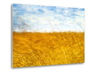 Golden Grass in the Wind