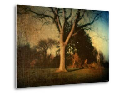Memories of a Tree