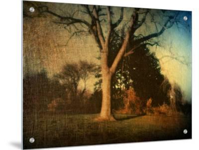 Memories of a Tree by Robert Cattan