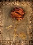 Three White Roses-Robert Cattan-Photographic Print