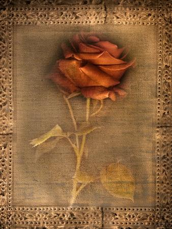Rose on Fabric
