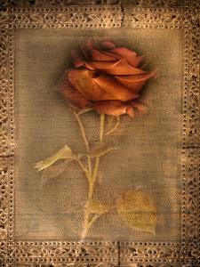 Rose on Fabric by Robert Cattan