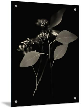 Small White Flower Buds and Leaves by Robert Cattan