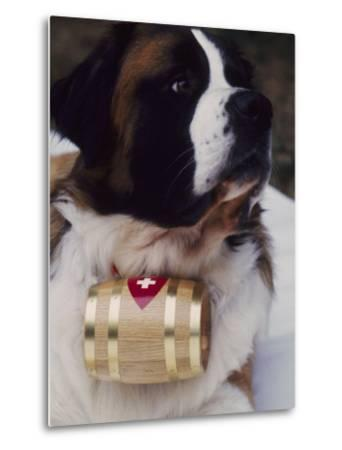 St. Bernard with Rescue Barrel