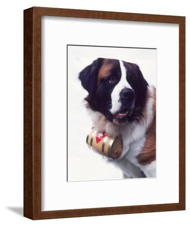 St. Bernard with Rescue Barrel