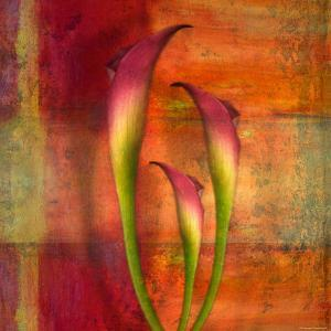 Three Pink Lilies by Robert Cattan