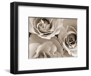 Three White Roses by Robert Cattan