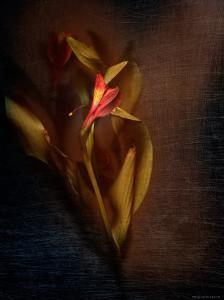 Two Floral Stems by Robert Cattan