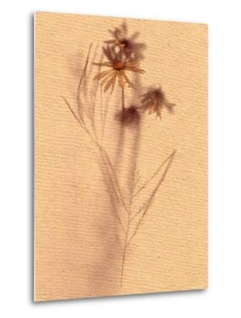 Wilted Flower and Stem Sketch