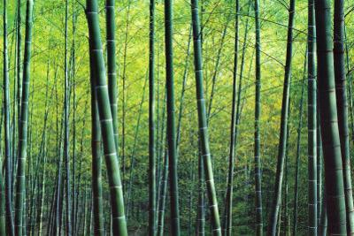 The Bamboo Grove