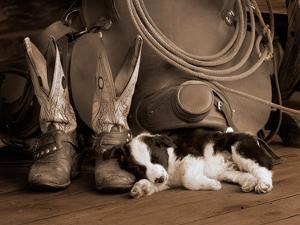 Cowboy Puppy Sepia by Robert Dawson