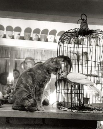 Child, Cat and Dove